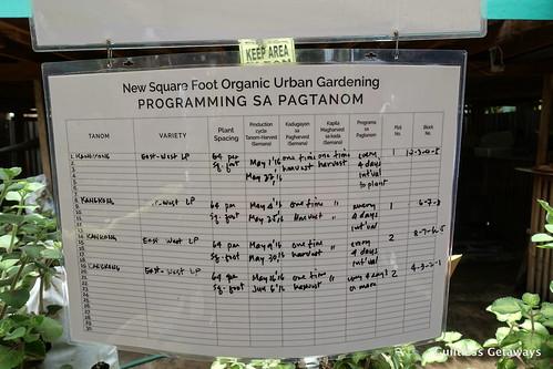 square-foot-farming.jpg