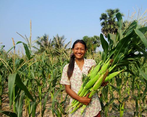 Women farmer in Cambodia holding corn harvest