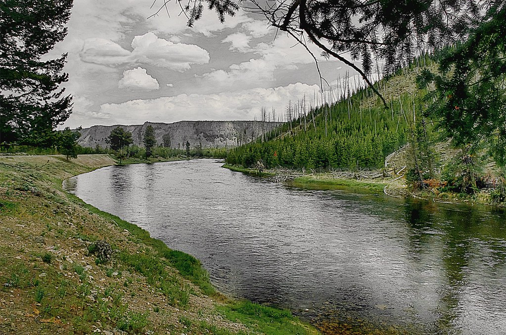 Fly fishing in yellowstone national park for Yellowstone river fishing