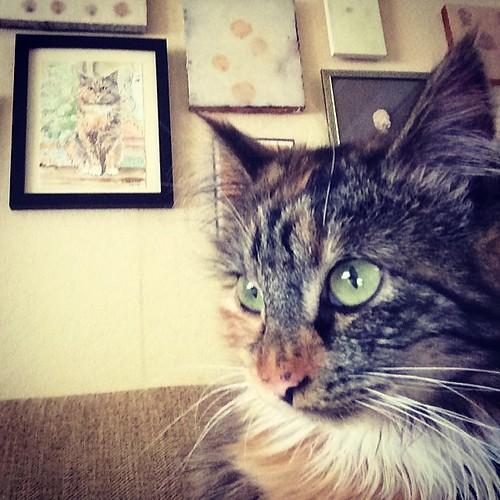 Wylla and Wylla. #ibkc #wyllastout #kitten