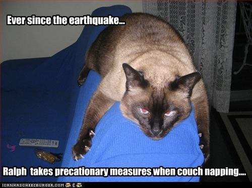 Interesting Pictures Funny: Funny-pictures-cat-is-scared-of-earthquakes