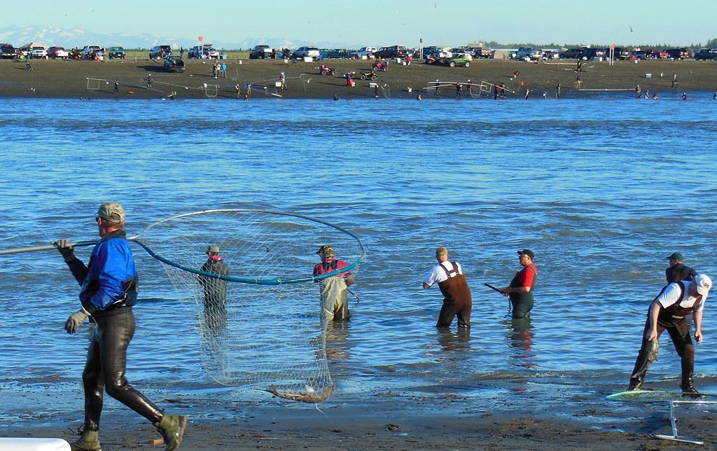 Alaska kenai river dipnetting fishing for Kenai river fishing report