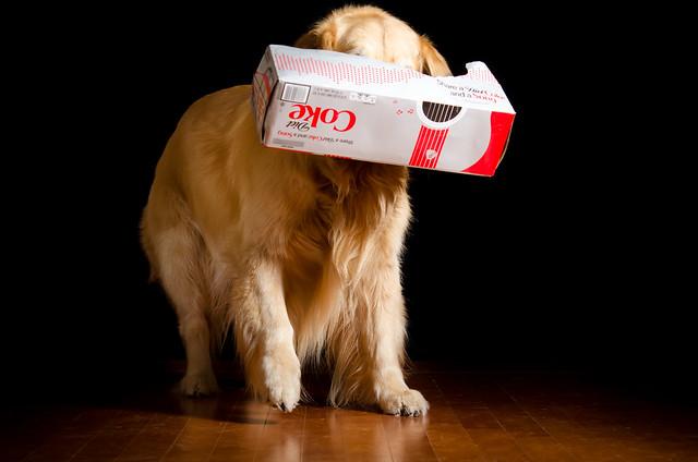 Free Dog Toy!