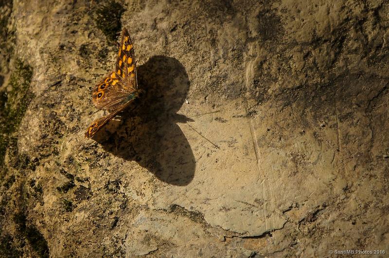 Una mariposa y su sombra