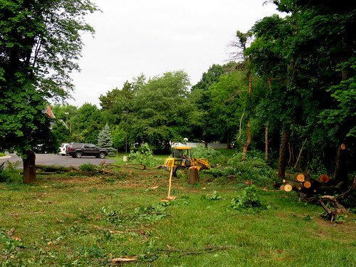 a lot of trees destroyed