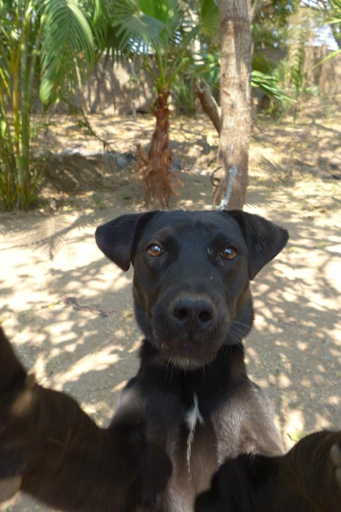 Dog Selfie Doesn T It Look A Selfie Nchenga Flickr