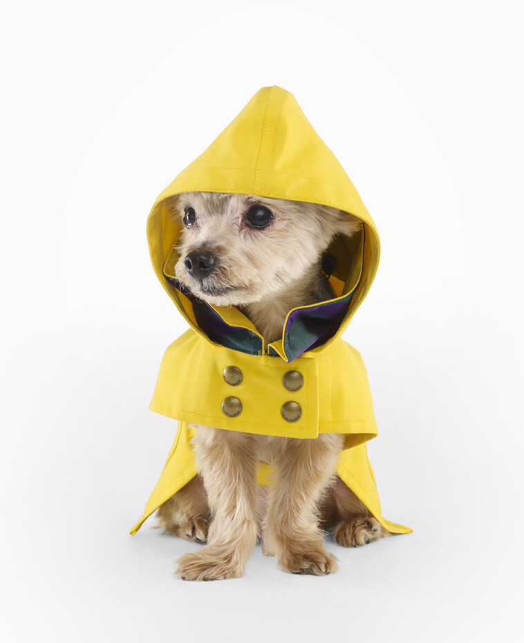 Dog Rain Jackets Uk