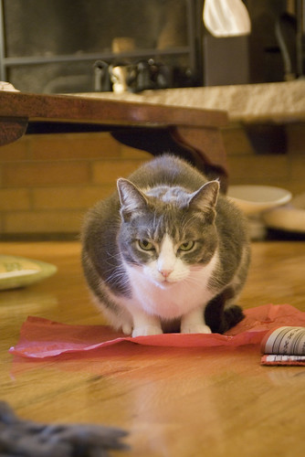Changes in routine (going back to school in the fall, having a baby, etc) can stress out your cat! Here are 3 tips that can help your cat to stay healthy.