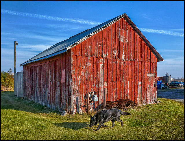 Black Dog Red Barn  Flickr  Photo Sharing. Villanova University Reviews. Who To Make Your Own Website. Online Masters Certificate Pallet Jack Miami. Controlling Internet Access Cisco 2800 Eol. College San Antonio Texas Online Golf School. Auto Body Schools In Pa Usda Rural Eligibility. Georgia Workers Comp Attorney. Homeowner Mailing Lists Banis Plastic Surgery