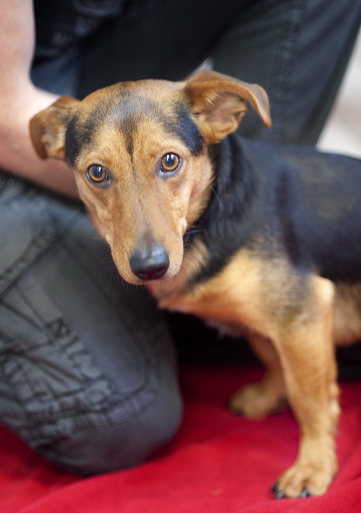 Faithful Companions Dog Rescue Reviews