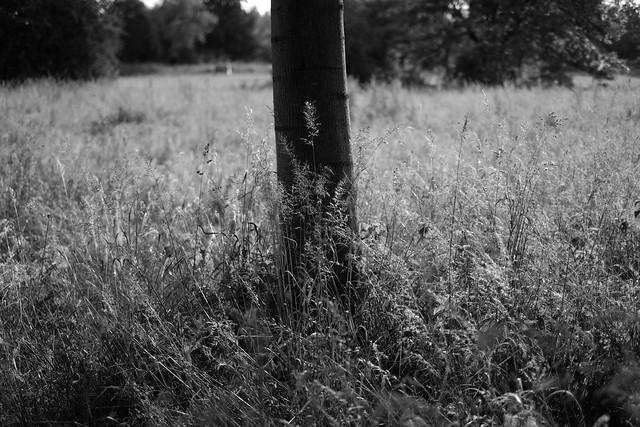 Summer grasses2