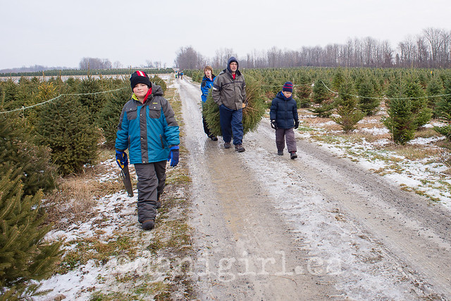 Christmas tree quest 2014-5