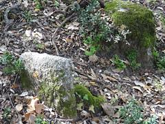 Deux stèles de tombe proches l'une de l'autre