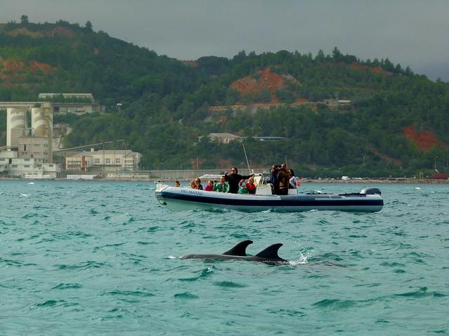 Delfines en el río Sado (Troia, Alentejo)
