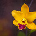 Orchid From Garden