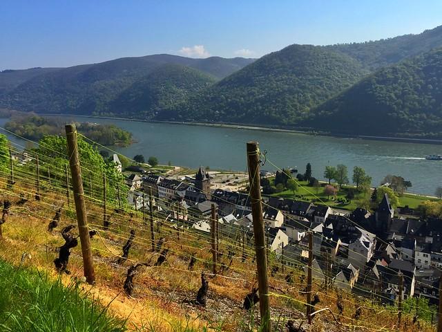 Viñedos en el Valle del Rin (Alemania)