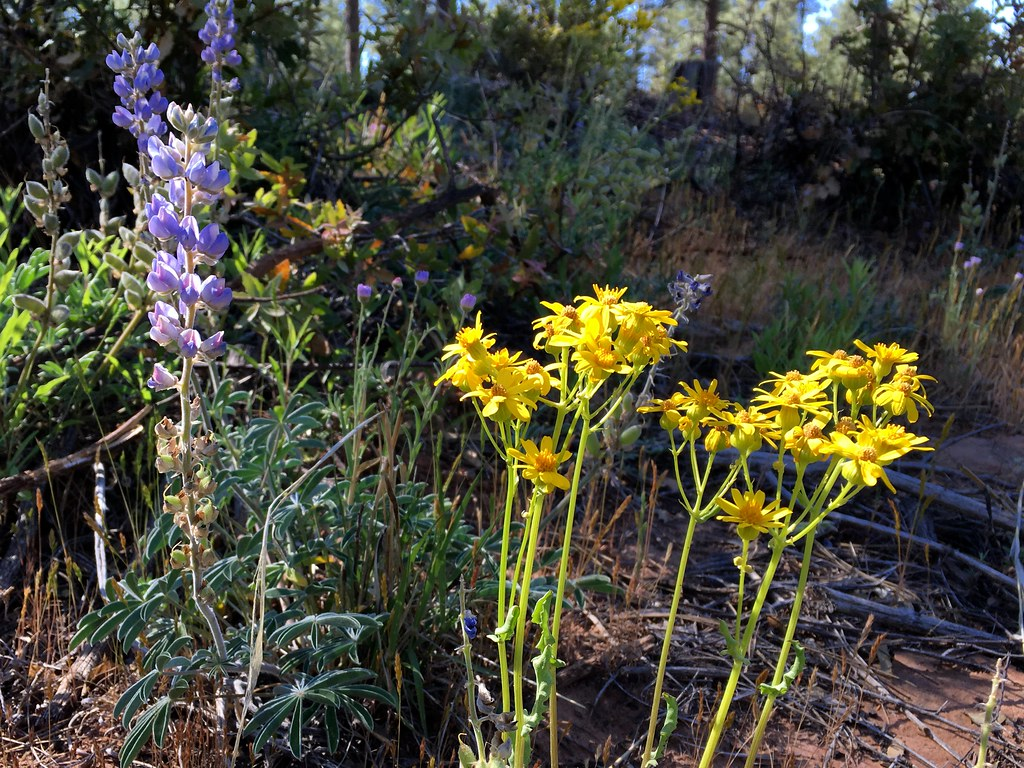 Ragweed Photos and Information - The Spruce