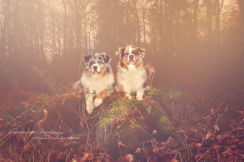 dogumented Welcome #autumn...