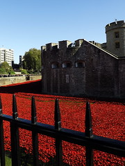 Tower of London Poppies by claire.nicholson22