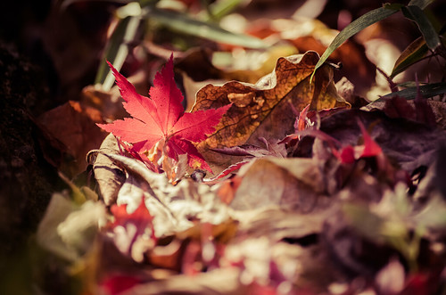 小さな秋見っけ