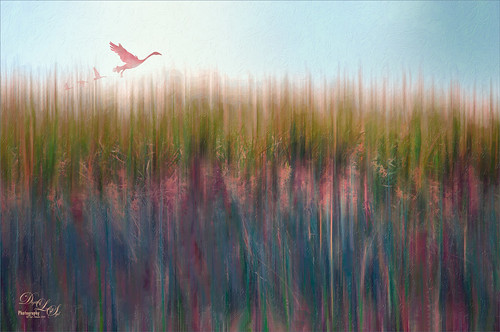 Painterly image of the Viera Wetlands