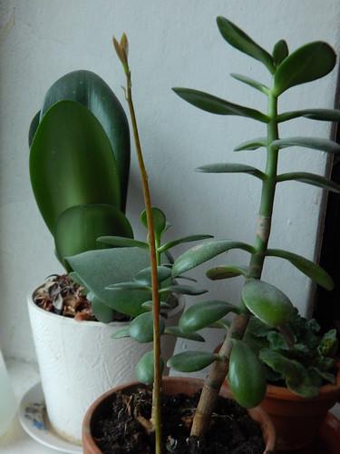 Как я вырастила авокадо из косточки | ХорошоГромко.ру