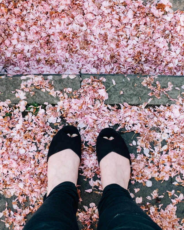 pink cherry blossom on ground