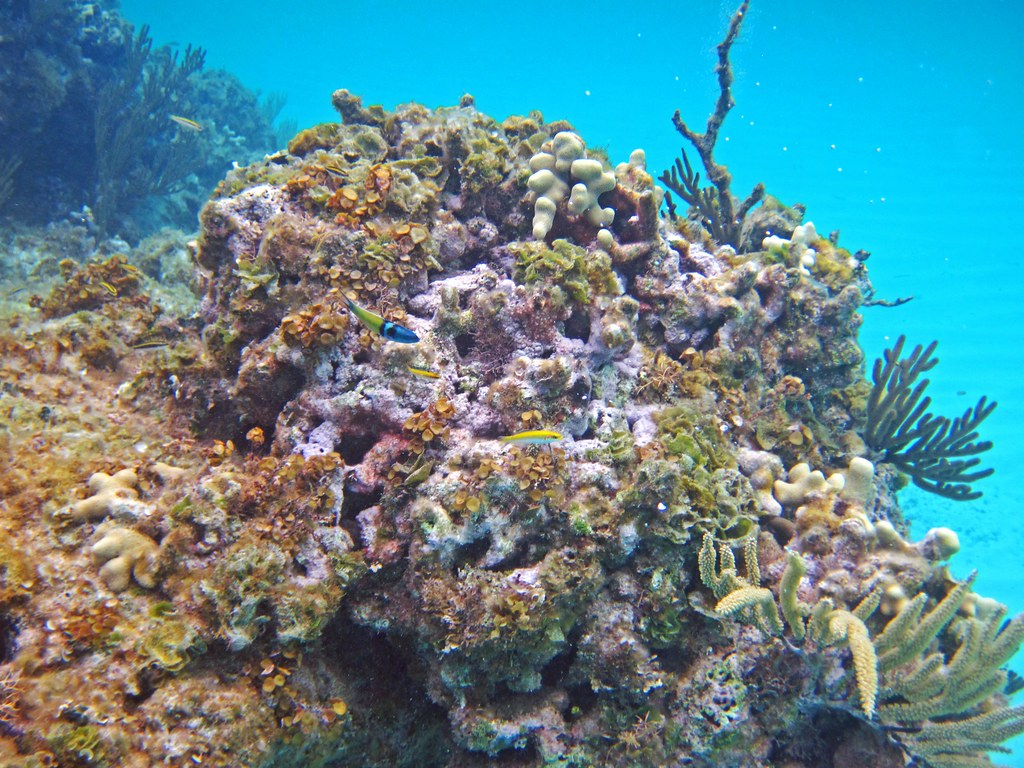 Patch Reef In French Bay San Salvador Island Bahamas 1
