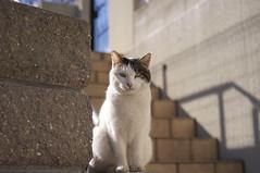 Eine Katze auf der Treppe