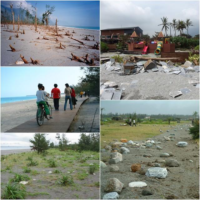七星潭海岸保安林歷經兩次颱風對照。圖片來源:李光中