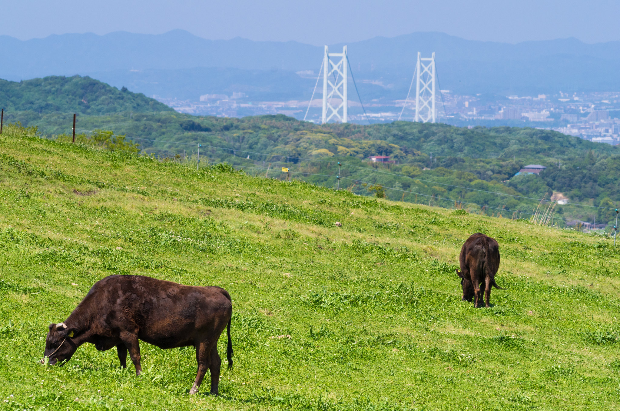 淡路の牧場
