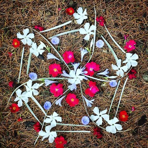 Garden Mandala No. 71 Happy Independence Day! #waldorfhome #mandala #gardening #gardenart #flowers #flowerstagram #landart #gardenartflowers #mandalaart #4thofjuly #independenceday #redwhiteandblue #sixpointedstar #summer #oleander #roses #morningglory #