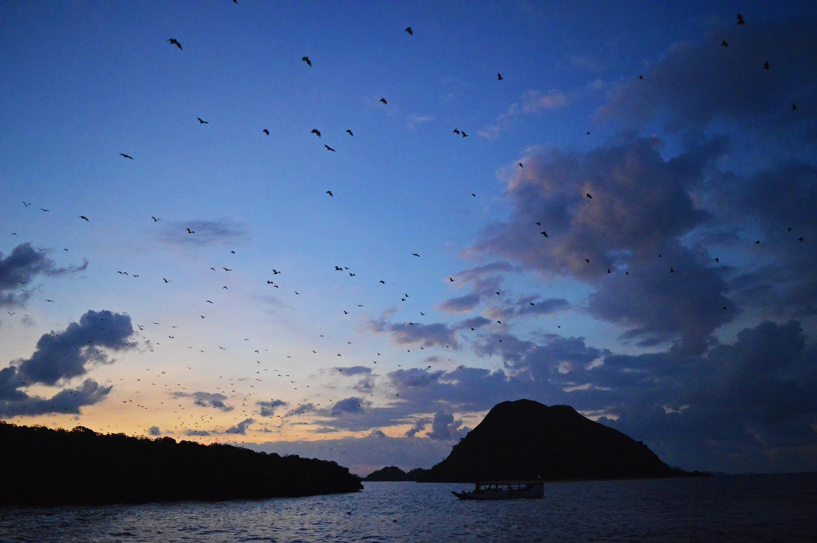 Bat Island (Pulau Kalong), Komodo National Park.