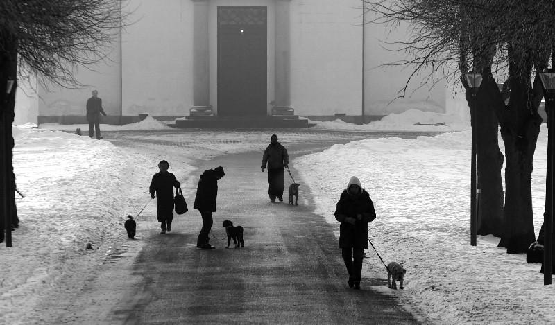 Dog Walking Winter Essentials