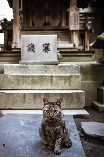神社の賽銭箱の前にいるネコの写真