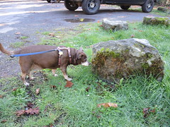 Hyzzie by a boulder