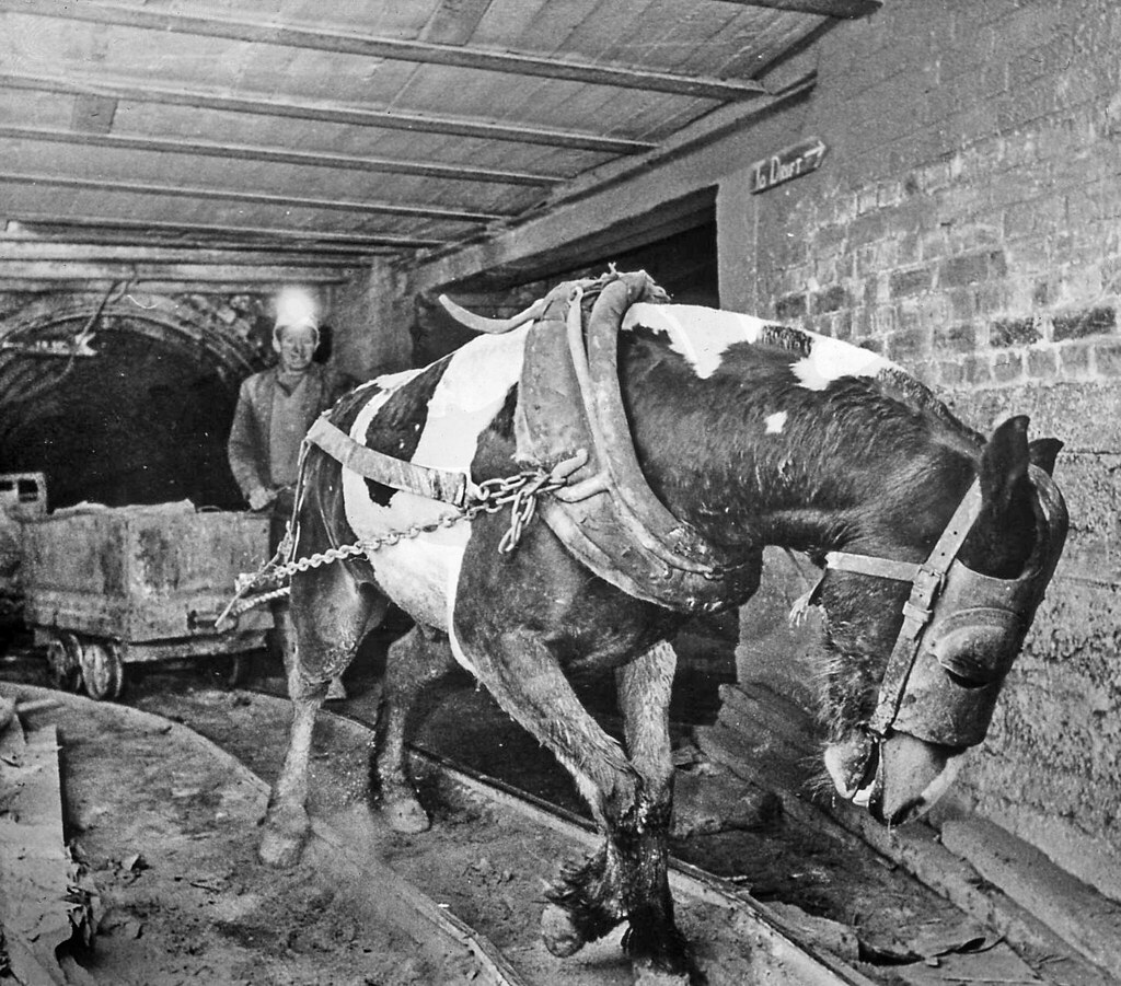 Coal Mines and Pit Ponies: Farriers made sparkless ...