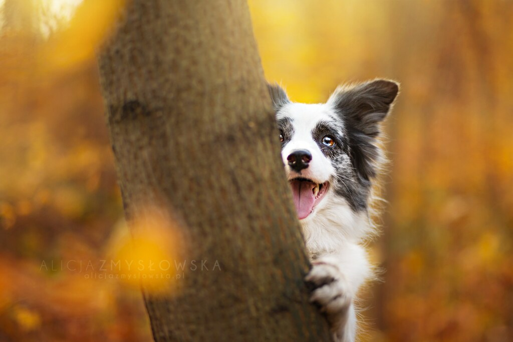 cute animal backgrounds