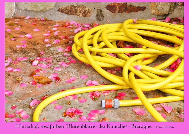 Hinterhof, rosafarben - Wasserschlauch - Blütenblätter der Kamelie - Foto: Brigitte Stolle, Bretagne 2016
