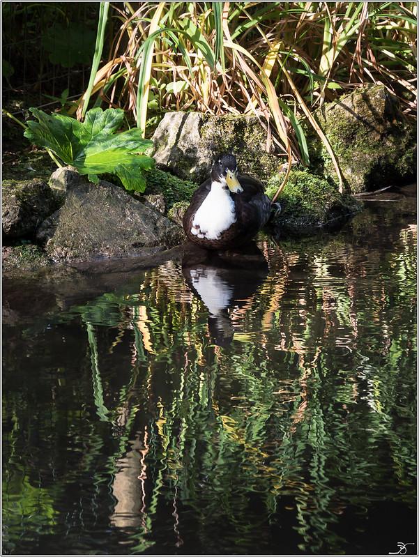 Moulin à Tan : oiseaux 28812036481_7dbb48059c_c