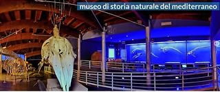 Museo del Mediterraneo programma di ottobre 2018