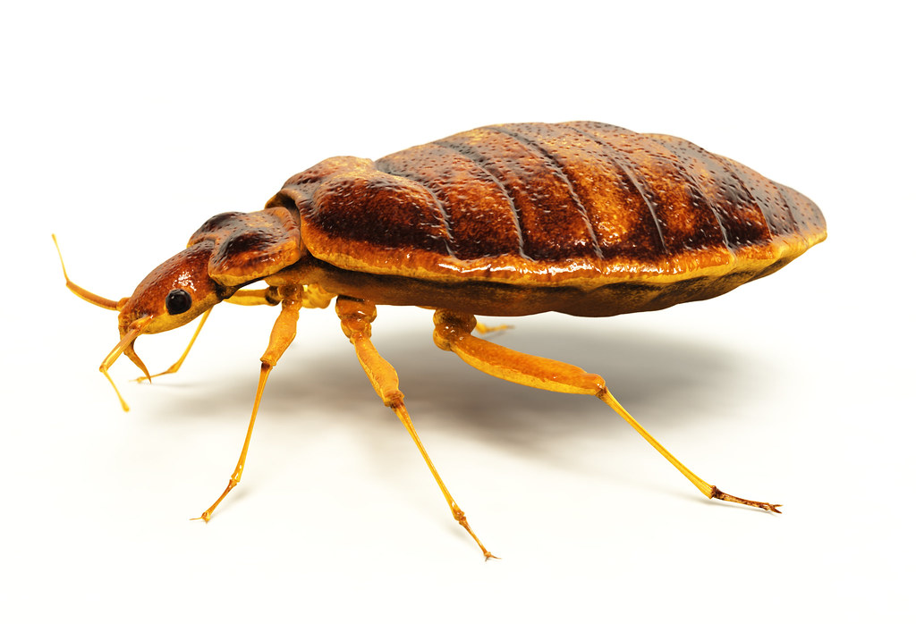 New Bed Bug Notice Requirements For Property Owners
