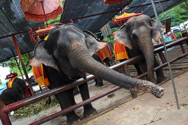 Elefantes en el sudeste asiático