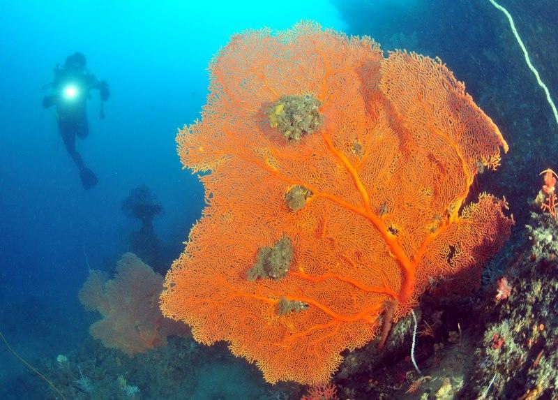 望海巷周邊海域擁有豐富的珊瑚礁,盼擴大範圍進行保育。圖片來源:活塞教練。