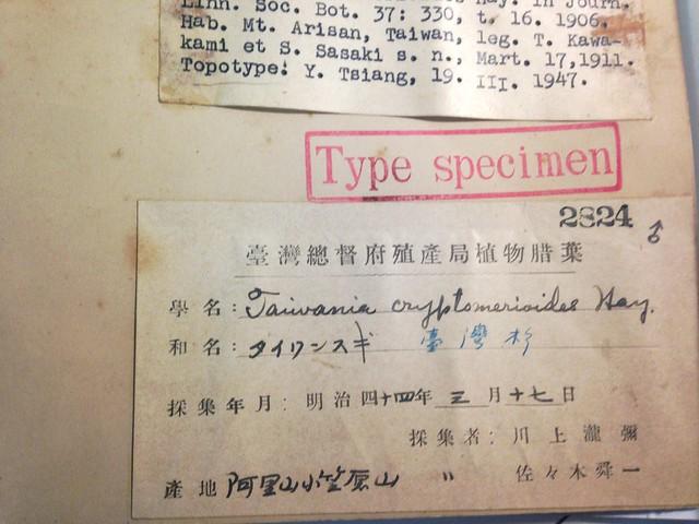 台灣杉模式標本註記。攝影:廖靜蕙