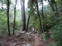 Trace de Punta Piscia : la montée sous la forêt