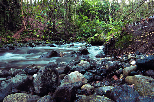 colin glen river coursework Colin glen forest park is a beautiful wooded glen at the foot of the belfast hills offering a range of outdoor activities and ireland's only gruffalo trail.