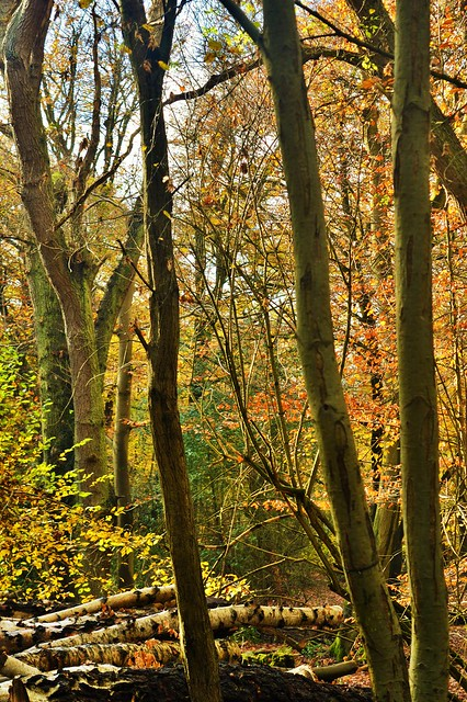 Epping Forest Loughton Flickr Photo Sharing