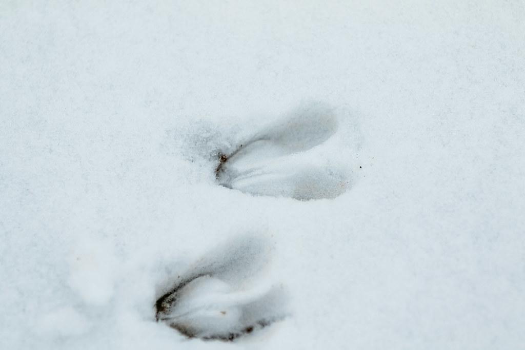 Kauriin jälki | Hannu Alatalo | Flickr
