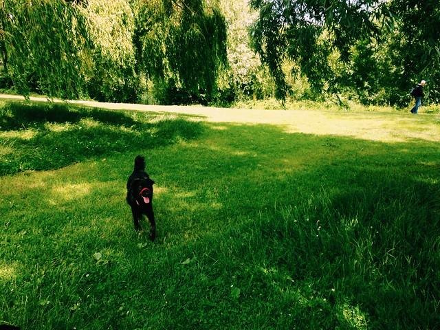 Dogs at Hampstead Heath